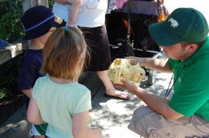 A trip to the zoo can be educational. This staff member explains to our kids how a lion hunts and eats, using a lion skull. (Photos by Laura Weisskopf Bleill)