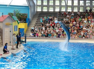 The dolphin show is a must-see at the Brookfield Zoo.