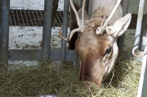 Hardy's Reindeer Ranch C-U Essential Toolkit Chambanamoms