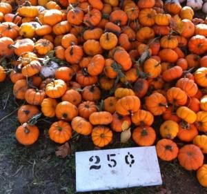 Negangard pumpkin patch Champaign urbana Philo Sidney halloween