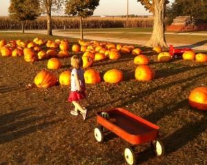 pumpkin patch Champaign Urbana Halloween