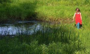 Chambanamoms Champaign County Forest Preserve Homer Lake Preserve