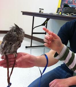 Anita Purves Nature Center Owls