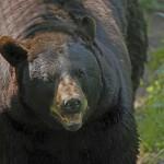 wildlife prairie state park Illinois peoria hanna city