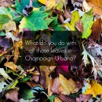 Signs of Fall: Leaf Collection Begins in Champaign-Urbana & Beyond