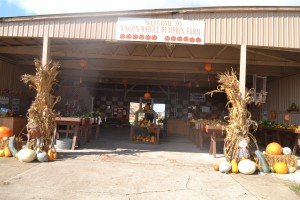 The Wagon Wheel Pumpkin Patch is open daily with free admission! Photo credit: Kelly Youngblood