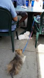 pets in downtown Champaign-Urbana www.chambanamoms.com