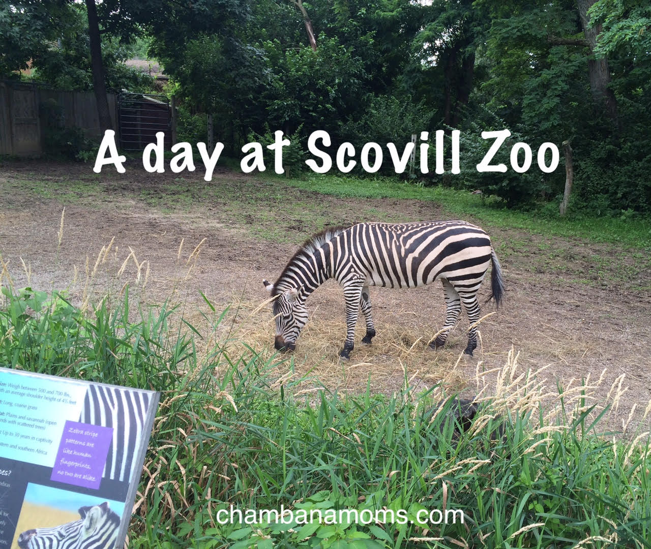 Penguins In Central Illinois Yes A Mom Reviews Scovill Zoo