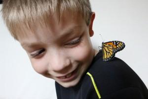 monarch butterflies in champaign-urbana on www.chambanamoms.com