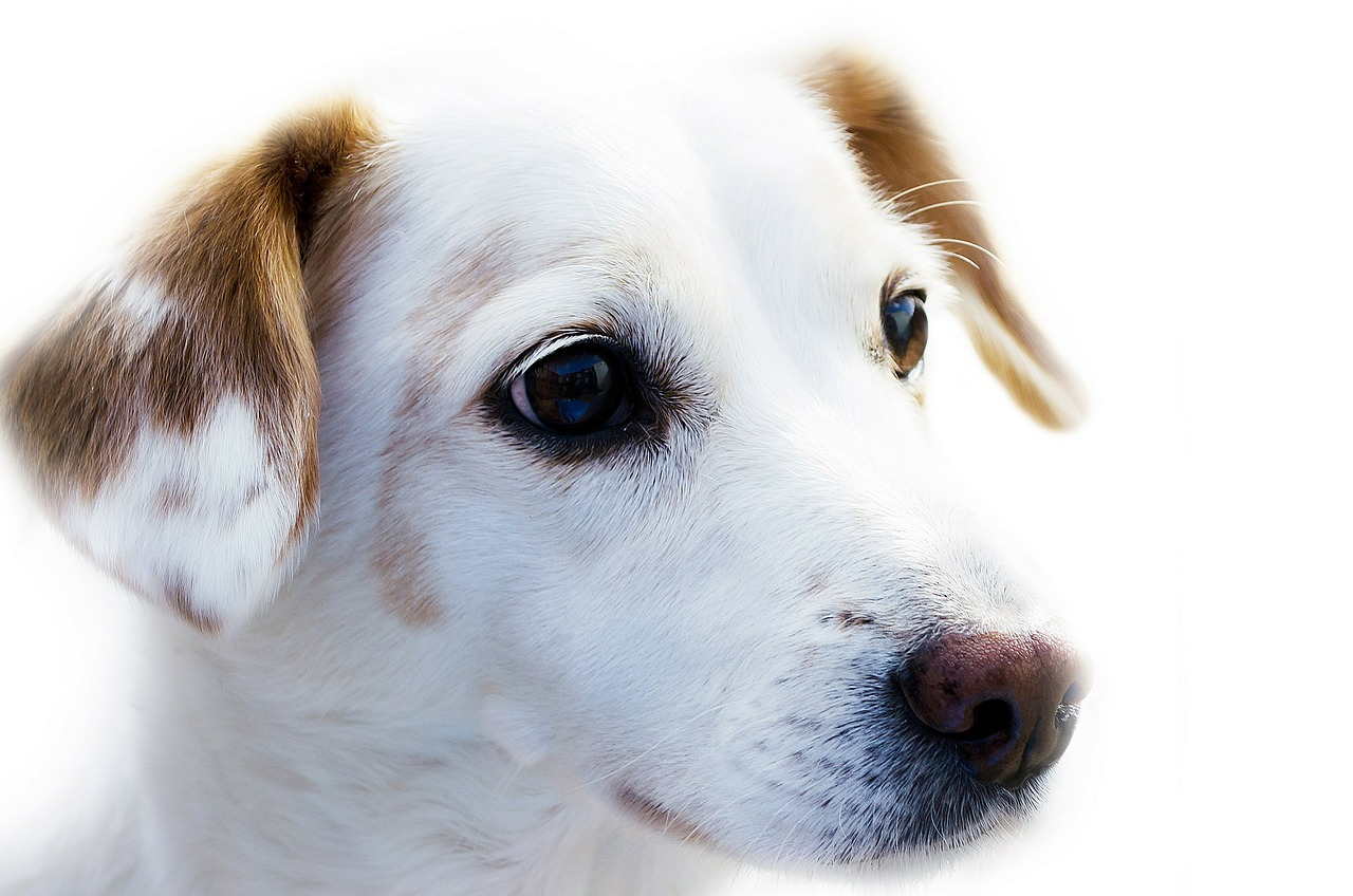 Veterinarians are recommending dogs receive the flu vaccine as a result of an outbreak in the Chicago area.