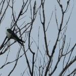 Champaign Mom Sparks Bird Frenzy