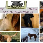 Champaign-Urbana Facebook Page Helps Lost Dogs Return Home