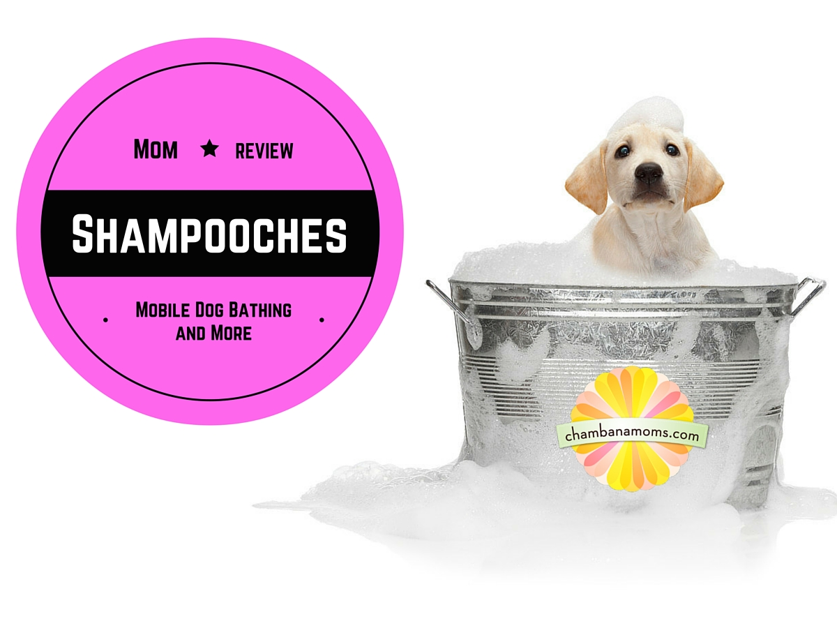 Mom Review_ShampoochesMobile Grooming-2