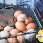 Farm Fresh Eggs in Champaign-Urbana: Where To Find