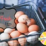 farm fresh eggs champaign urbana