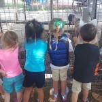 Prairie Farm Birthday Party Review