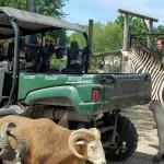 Aikman Wildlife Adventure in Arcola on Chambanamoms.com