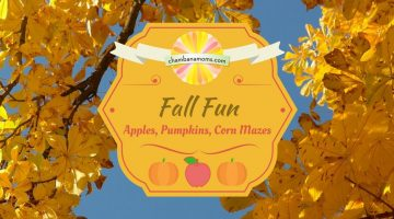 Champaign-Urbana Area Fall Fun: Apples, Pumpkins, Corn Mazes Sponsored by Curtis Orchard