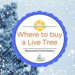 Where To Buy A Live Christmas Tree Sponsored by Prairie Gardens