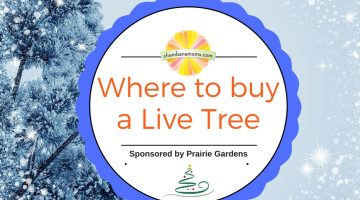 Where To Buy A Live Christmas Tree Sponsored by Prairie Gardens