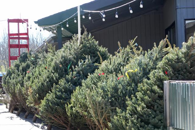 Live Christmas Trees at Prairie Gardens in Champaign, Illinois