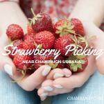 Where to Pick Strawberries Around Champaign-Urbana