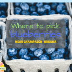 Where to Pick Blueberries Around Champaign-Urbana