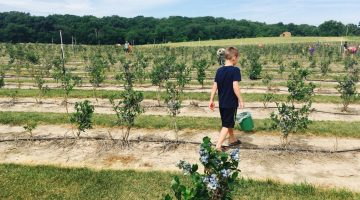 Goosecreek Blueberries in Monticello Offers Fun, U-Pick Experience