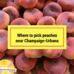 Where to pick peaches near Champaign-Urbana