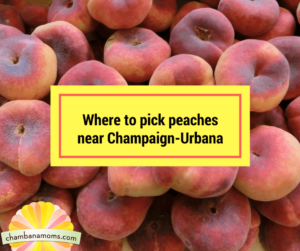 Where to pick peaches near Champaign-Urbana
