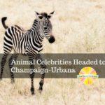 Animal Celebrities Headed to Champaign-Urbana
