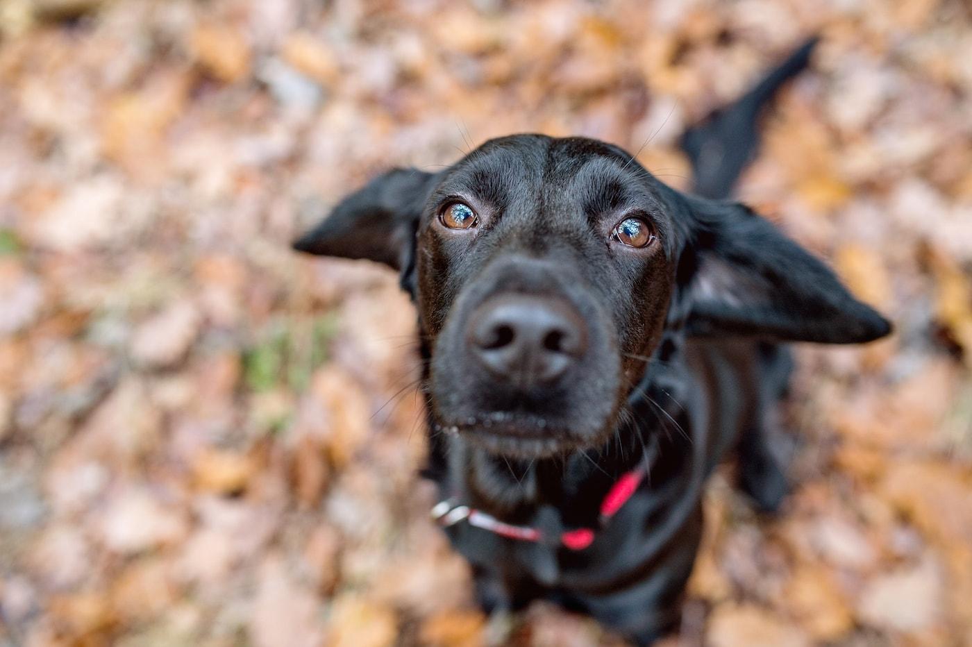 champaign urbana dog respiratory illness