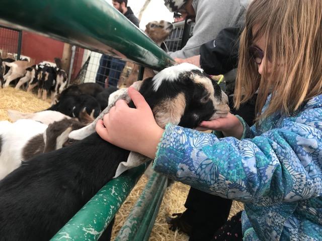 Prairie Fruits Farm Goats