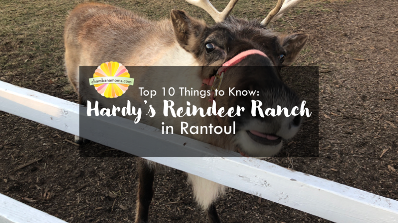 Top 10 Things to Know When Visiting Hardy's Reindeer Ranch