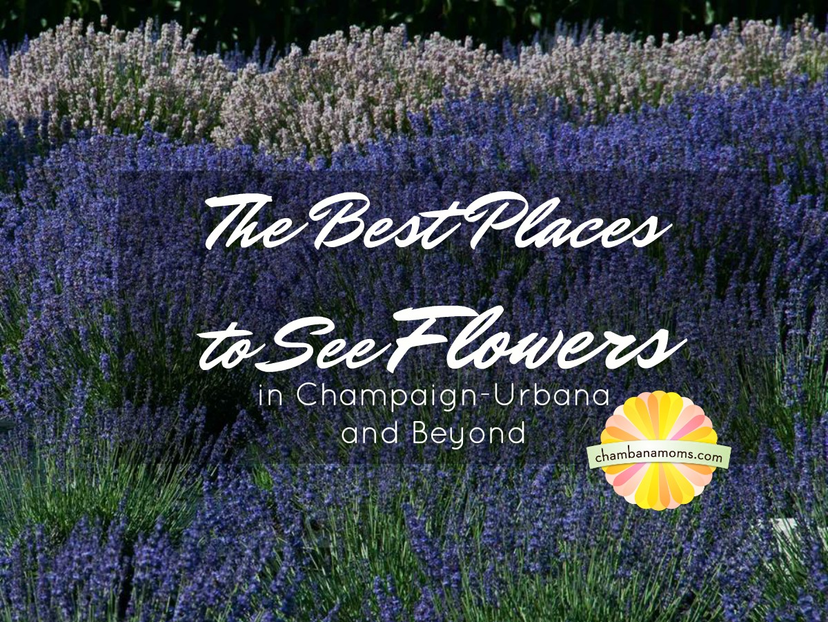 Gorgeous Gardens and Flower Farms in Champaign-Urbana: The Best Places to See Flowers