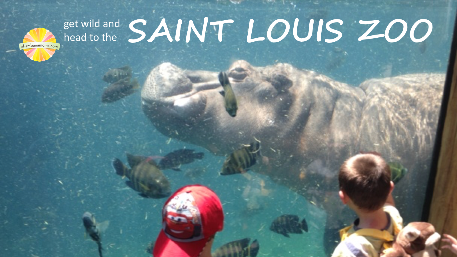 Frugal Family Fun: Get Wild and Head to the Saint Louis Zoo