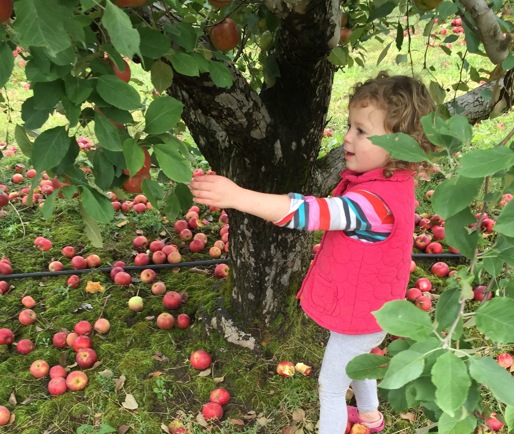 21 Things to Do in the Fall on a Budget in the Champaign-Urbana Area