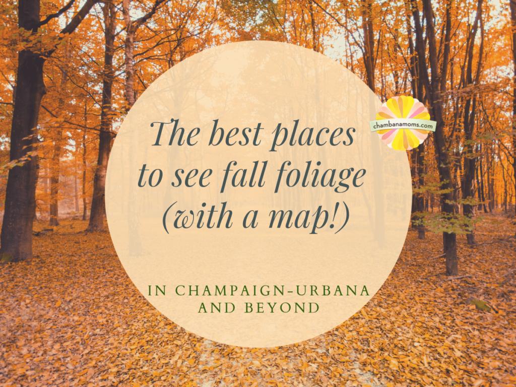 Fall foliage champaign urbana