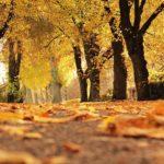 Fall foliage fall color in Champaign-Urbana