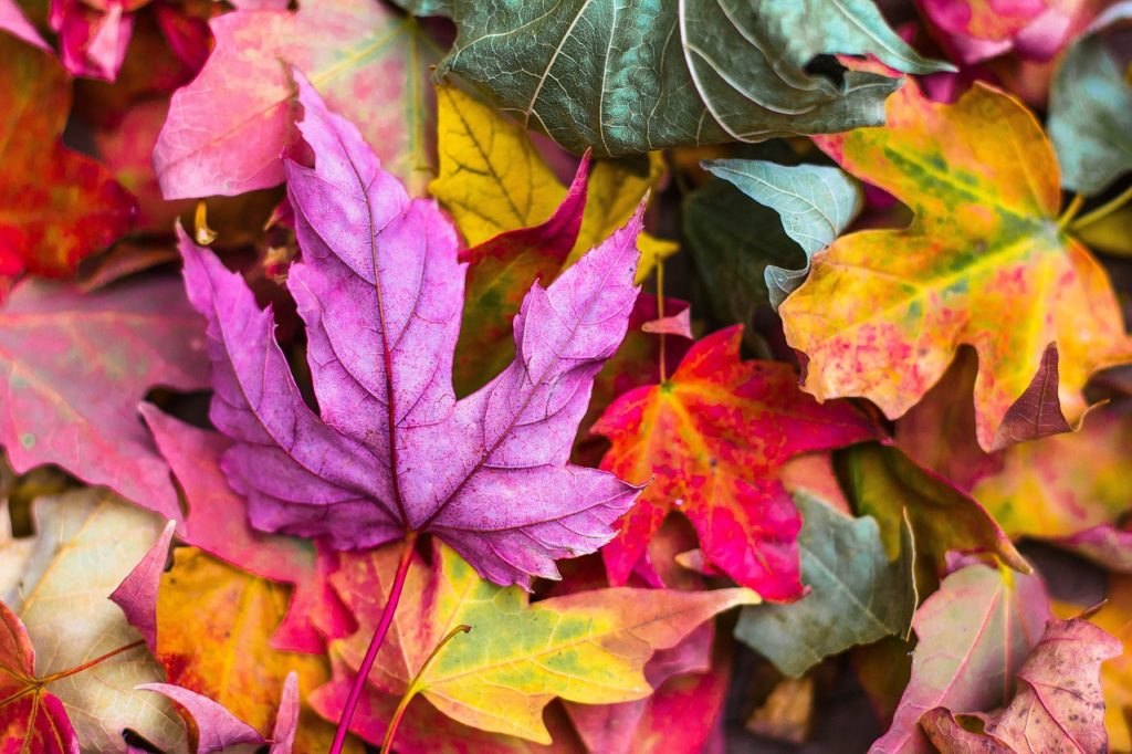 Fall Yard Waste Leaf Collection in Champaign-Urbana