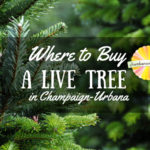Where to buy a live Christmas tree in Champaign-Urbana