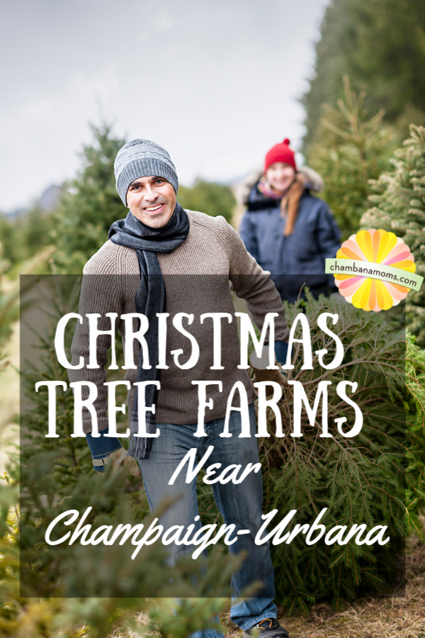 Where to buy a live Christmas tree in Champaign-Urbana and beyond
