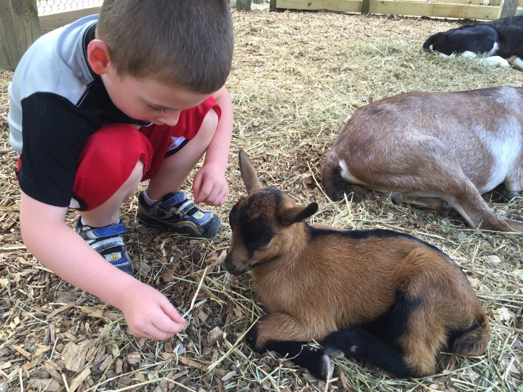 Meet the baby goats at Prairie Farm in Champaign, IL