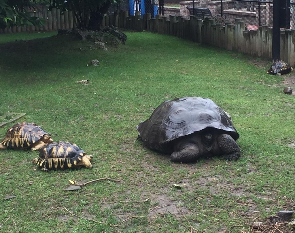 tortoises at Miller Park Zoo