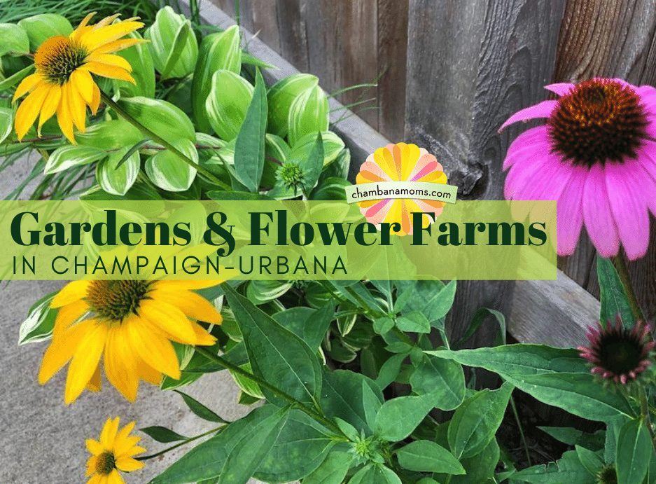 Gardens and Flower Farms in Champaign-Urbana