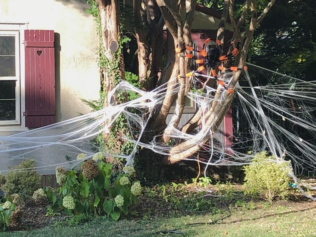 Giant yard spider