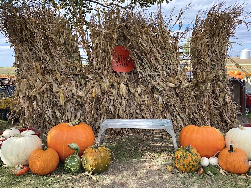 Negangard Pumpkin Patch photo spot
