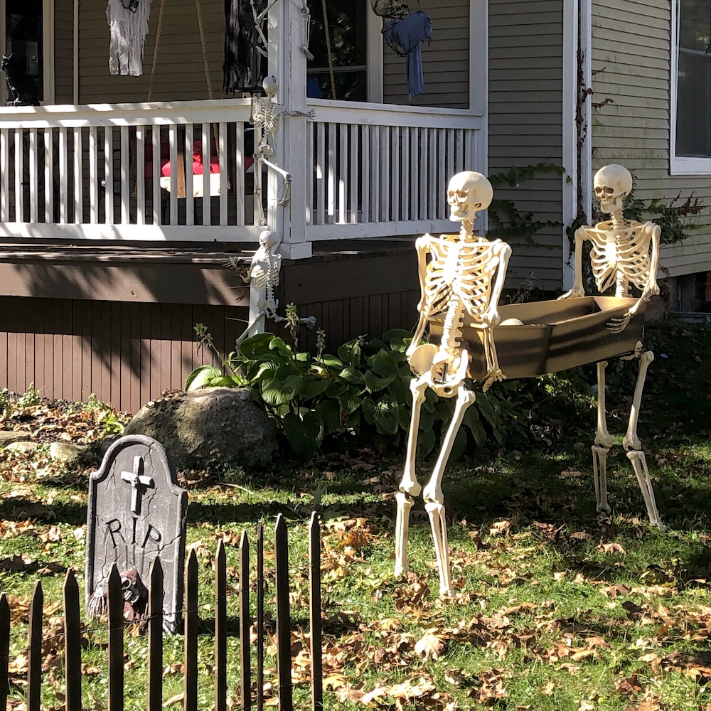 Halloween skeletons in Champaign yard
