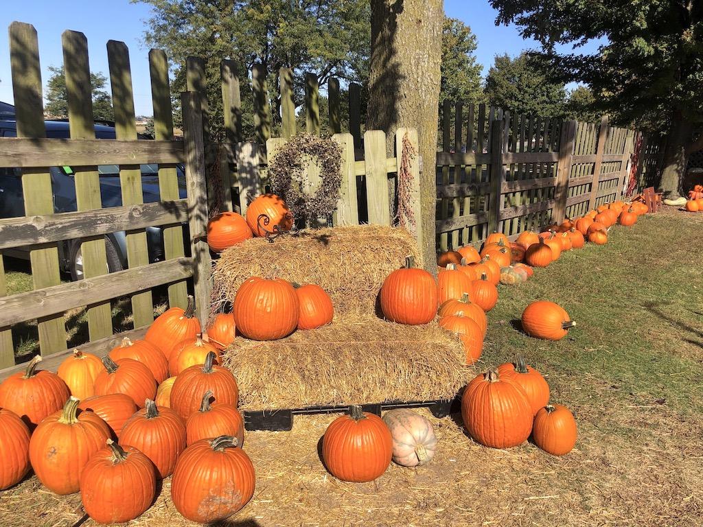 Pumpkins at Curtis Orchard