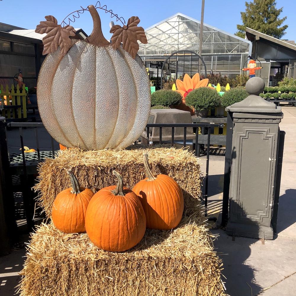 Pumpkins at Prairie Gardens